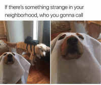 30 Of The Most Hilarious Animal Pictures That Will Make Your Day: If there's something strange in your  neighborhood, who you gonna call 30 Of The Most Hilarious Animal Pictures That Will Make Your Day