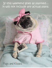 Memes, Happy, and Pugs: If this weekend goes as planned...  it will not include any actual plans.  Pugs and Kisses Who's with me??!! Happy weekend everyone!!! MWAH!!! xoxo ~ Theodora Grace