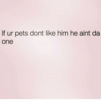 Pets, Live, and Girl Memes: If ur pets dont like him he aint da  one I LIVE by this! ( @singlewomanprobs )