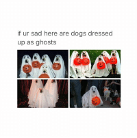 squad goals: if ur sad here are dogs dressed  up as ghosts squad goals
