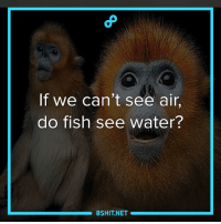 Memes, 🤖, and Revelation: If we can't see air,  do fish see water?  8SHIT NET Revelations.  8Shit