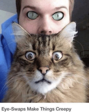 if we had cat eyes and they had human eyes… scary.: if we had cat eyes and they had human eyes… scary.