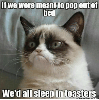 If we were meant to pop outof  bed  We'd all sleep in toasters If we were meant to pop out of bed