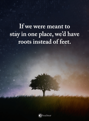 roots: If we were meant to  stay in one place, we'd have  roots instead of feet.