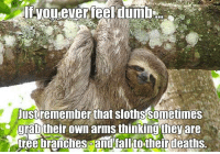 Sloth: If wou ever feel dumb  Just remember that sloths Sometimes  grab their own armsthinkingthey are  tree branchescandfalltostheir deaths