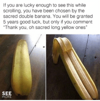 """Memes, Thank You, and Banana: If you are lucky enough to see this while  scrolling, you have been chosen by the  sacred double banana. You will be granted  5 years good luck, but only if you comment  """"Thank you, oh sacred long yellow ones""""  SEE  MORE Thank you oh sacred long yellow ones! 🙏🙏  (via See More)"""