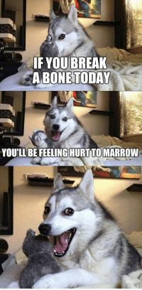 Punny dog 😂😂: IF YOU BREAK  A BONE TODAY  YOU'LL BE FEELINGHURTTOMARROW Punny dog 😂😂
