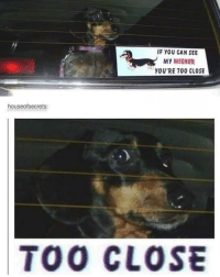 this is my favorite picture if all time textposts textpost meme memes tumblr tumblrfunny funny follow like share followforfollow likeforlike shoutout postoftheday fun love followme hilarious dog pupper puppy doggo weiner weirnerdog dashund anxiety: IF YOU CAN SEE  MY WIENER  YOU'RE TOO CLOSE  houseofsecrets:  TOO CLOSE this is my favorite picture if all time textposts textpost meme memes tumblr tumblrfunny funny follow like share followforfollow likeforlike shoutout postoftheday fun love followme hilarious dog pupper puppy doggo weiner weirnerdog dashund anxiety
