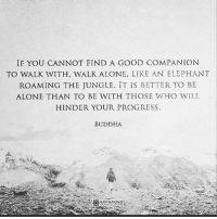 Being Alone, Friends, and Memes: IF YOU CANNOT FIND A GOOD COMPANION  TO WALK WITH, WALK ALONE, LIKE AN ELEPHANT  ROAMING THE JUNGLE. IT IS BETTER TO BE  ALONE THAN TO BE WITH THOSE WHO WILL  HINDER YOUR PROGRESS.  BUDDHA  EXPANDED Rp via our dear friends @expanded_consciousness