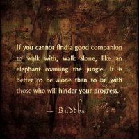 Memes, 🤖, and Hinder: If you cannot find a good companion  to walk with, walk alone, like an  elephant roaming the jungle. It is  better to be alone than to be with  those who will hinder your progress. Thanks Universoul Awakening