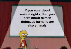 Animals, Animal, and Animal Rights: If you care about  animal rights, then you  care about human  rights, as humans are  also animals. Me_irl