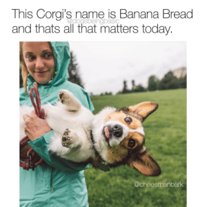 If you don't name a loaf of bread pupper after bread do you even have a corgi? Source: @tashafittsvia @dogsbeingbasic: If you don't name a loaf of bread pupper after bread do you even have a corgi? Source: @tashafittsvia @dogsbeingbasic