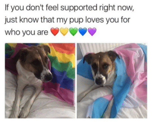the-uncultured-lesbian:  Who's sweet doggo is this!?: If you don't feel supported right now,  just know that my pup loves you for  who you are the-uncultured-lesbian:  Who's sweet doggo is this!?