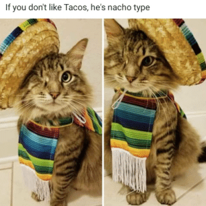 If you don't like Tacos, he's nacho type.: If you don't like Tacos, he's nacho type If you don't like Tacos, he's nacho type.