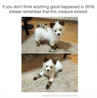 PSA: If you don't think anything good happened in 2016  please remember that this creature existed  @bustle  image via lovecuteanimals.com PSA