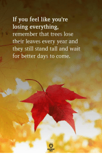 Trees, Remember, and They: If you feel like you're  losing everything,  remember that trees lose  their leaves every year and  they still stand tall and wait  for better days to come.  ELATIONGHP