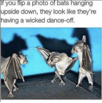 https://t.co/ygDpaoeC6K: If you flip a photo of bats hanging  upside down, they look like they're  having a wicked dance-off.  0 https://t.co/ygDpaoeC6K