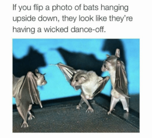 https://t.co/Qwu3JzgxMJ: If you flip a photo of bats hanging  upside down, they look like they're  having a wicked dance-off. https://t.co/Qwu3JzgxMJ