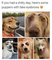 Idk bout you, but I feel better already 😎 @fruitoftheloin: If you had a shitty day, here's some  puppers with fake eyebrows  fruitoftheloin Idk bout you, but I feel better already 😎 @fruitoftheloin