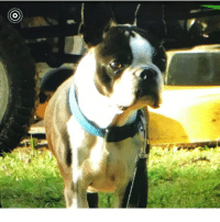 Animals, Memes, and Phone: If you have lost a pet please email a photo to animalcontrol@claycountygov.com with your name, address, phone number(s), microchip information (if available) and relevant information about your lost pet to include area your pet was lost in. Your information will not be shared to the album but the photo and pets name will.  If reported as found Animal Services will contact you to put you in contact with the finder or an Animal Services Officer who has located your missing pet. This service does not replace your own efforts to locate your missing pet(s) which should include frequently walking through the shelter to best identify your pet. Animals impounded as strays are held for three days prior to becoming available. We will do our best to keep this album as up to date as possible with the information we are provided. For questions about animals in this album or if you found an animal please either email us at animalcontrol@claycountygov.com or call the shelter at 904-269-6342