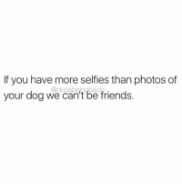 8000+ photos of your dog sleeping? Let's do this BFF.: If you have more selfies than photos of  your dog we can't be friends.  @dogsbeingbasie 8000+ photos of your dog sleeping? Let's do this BFF.