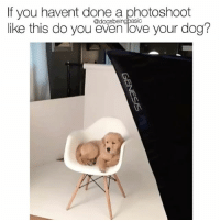 That being said I'm building a photo room today. Pup @ladygirl_thegolden @realdogmomsofchicago @lauraphotospets @trioaf: If you havent done a photoshoot  f you havent done a phooshoot  ike this do you even love your dog?  @dogsbeingbasic That being said I'm building a photo room today. Pup @ladygirl_thegolden @realdogmomsofchicago @lauraphotospets @trioaf