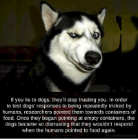 Memes, 🤖, and Container: If you lie to dogs, they'll stop trusting you. In order  to test dogs' responses to being repeatedly tricked by  humans, researchers pointed them towards containers of  food. Once they began pointing at empty containers, the  dogs became so distrusting that they wouldn't respond  when the humans pointed to food again.  fb.com/factsweird