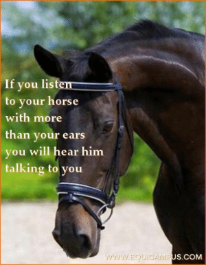 listen to your horse -   - #Genel: If you listen  to your horse  with more  than your ears  you will hear him  talking to you  www.EQUIOCAMPUS.COM listen to your horse -   - #Genel