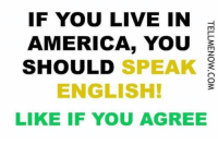 Family Guy, Memes, and The Voice: IF YOU LIVE IN  AMERICA, YOU  S  SHOULD  SPEAK  ENGLISH!  LIKE IF YOU AGREE This is #America correct....Why wouldn't someone expect they should speak English? #TrumpPence2016 #MakeAmericaGreatAgain #NoAmnesty #AmericaFirst facebook.com/exposethetruthtoday  We'd like to invite you to the newest member of the Voice family guys,Stop by and check it out facebook.com/groups/TVOTPMovement/