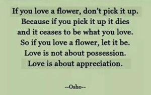 let it be: If you love a flower, don't pick it up.  Because if you pick it up it dies  and it ceases to be what you love.  So if you love a flower, let it be.  Love is not about possession.  Love is about appreciation.  Osho-