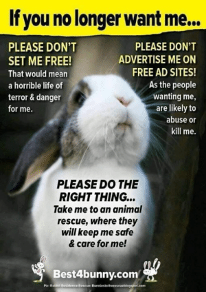 Do the Right Thing: If you no longer want me...  PLEASE DON'T  PLEASE DON'T  ADVERTISE ME ON  SET ME FREE!  FREE AD SITES!  That would mean  As the people  a horrible life of  wanting me,  are likely to  terror & danger  for me.  abuse or  kill me.  PLEASE DO THE  RIGHT THING...  Take me to an animal  rescue, where they  will keep me safe  & care for me!  Best4bunny.com  Pic: Rabbit Residence Roscue: Bunniestotherescueblogspot.com