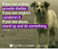Memes, Leggings, and Providence: If you see a stray,  provide shelter.  if you see neglect,  condemn it.  If you see abuse,  stand up and do something  HENDRICK&CO.  Type YES and SHARE if you agree! Katie will have all four paws amputated. Will you help us give her the prosthetic legs she will need to walk again? Click the link to find out what happened.... Keep Reading: http://dogco.org/save-katie-foe