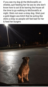 "Ass, Bad, and Bitch: If you see my dog @ the McDonald's on  shields, quit feeding her fat ass bc she don""t  know how to act & be leaving the house all  the time to go walking to McDonald's at  night. She's not even a stray dog. She's just  a gold diggin ass bitch that be acting like  she's a stray so people will feel bad for her  & feed her burgers 30 Of The Most Hilarious Animal Pictures That Will Make Your Day"