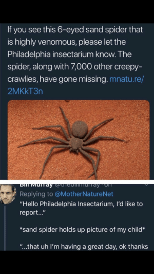 "Creepy, Hello, and Spider: If you see this 6-eyed sand spider that  is highly venomous, please let the  Philadelphia insectarium know. The  spider, along with ,000 other creepy-  crawlies, have gone missing. mnatu.re/  2MKkT3n  Replying to @MotherNatureNet  ""Hello Philadelphia Insectarium, I'd like to  report...""  *sand spider holds up picture of my child*  ""...that uh I'm having a great day, ok thanks Isn't this spider in that old hilarious video of a spider who couldn't hide?"