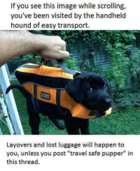 "Travel safe, pupper: If you see this image while scrolling,  you've been visited by the handheld  hound of easy transport.  Layovers and lost luggage will happen to  you, unless you post ""travel safe pupper"" in  this thread Travel safe, pupper"