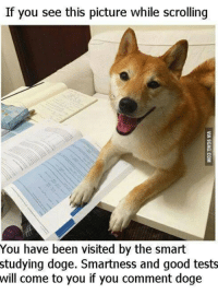 Dank, Doge, and Good: If you see this picture while scrolling  You have been visited by the smart  studying doge. Smartness and good tests  will come to you if you comment doge heck, dont risk it frens!