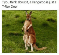 A furry T. rex breh: If you think about it, a Kangaroo is just a  T-Rex Deer A furry T. rex breh