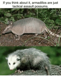 Think, You, and Just: If you think about it, armadillos are just  tactical assault possums