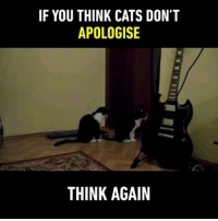 9gag, Cats, and Memes: IF YOU THINK CATS DON'T  APOLOGISE  IC  THINK AGAIN Sorry cat is sorry 🙀 Follow @9gag - - 📸LonelyAtma | YT - - 9gag apologise sorry fairytail