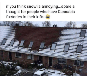 Snow, Cannabis, and Thought: if you think snow is annoying...spare a  thought for people who have Cannabis  factories in their lofts