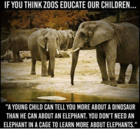 "Children, Dinosaur, and Facts: IF YOU THINK ZOOS EDUCATE OUR CHILDREN.  ""A YOUNG CHILD CAN TELL YOU MORE ABOUT A DINOSAUR  THAN HE CAN ABOUT AN ELEPHANT. YOU DON'T NEED AN  ELEPHANT IN A CAGE TO LEARN MORE ABOUT ELEPHANTS."" Facts😤"