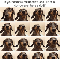 The only wiener pics you'll find in my phone. dogpeoplegetit @doxie83: If your camera roll doesn't look like this,  do you even have a dog?  @doxie  @bark The only wiener pics you'll find in my phone. dogpeoplegetit @doxie83