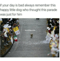 See be thankful lmaoooo NoChill: if your day is bad always remember this  happy little dog who thought this parade  was just for him  Hood clips.com See be thankful lmaoooo NoChill