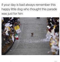 <p>Today is your day doggo. Go get em.</p>: if your day is bad always remember this  happy little dog who thought this parade  was just for him <p>Today is your day doggo. Go get em.</p>