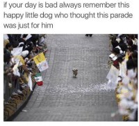 Bad, Tumblr, and Blog: if your day is bad always remember this  happy little dog who thought this parade  was just for him awesomacious:  This got me through many tough times