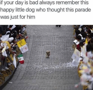 I hope you have a great day: if your day is bad always remember this  happy little dog who thought this parade  was just for him I hope you have a great day