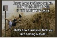 Funny, News, and Saw: If your home is hit by a dolphin,  DO NOT GO OUT TO SEE  IF THE DOLPHIN IS O  KAY.  That's how hurricanes trick you  into coming outside!