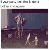 Lit, Memes, and Party: If your party isn't this lit, don't  bother inviting me