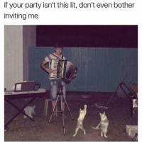 Lit, Memes, and Party: If your party isn't this lit, don't even bother  inviting me Pussy party 🙌🏼😸 Get following @scouse_ma @scouse_ma @scouse_ma @scouse_ma
