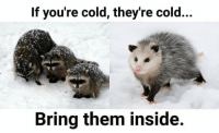 Cold: If you're cold, they're cold...  Bring them inside.